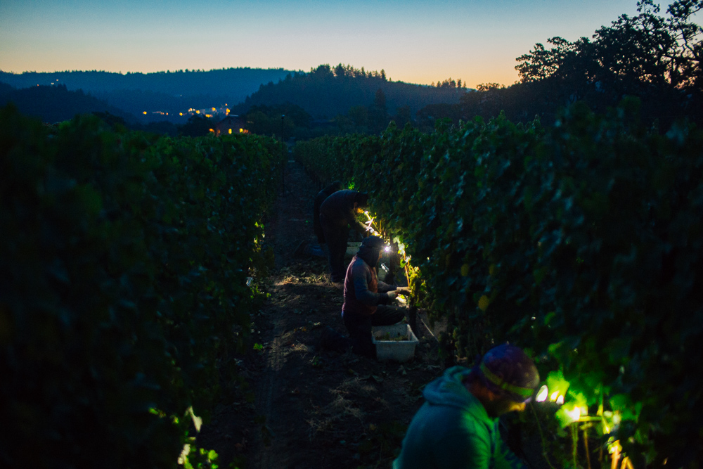 Ehlers Wine Harvest by Alexander Rubin Photography