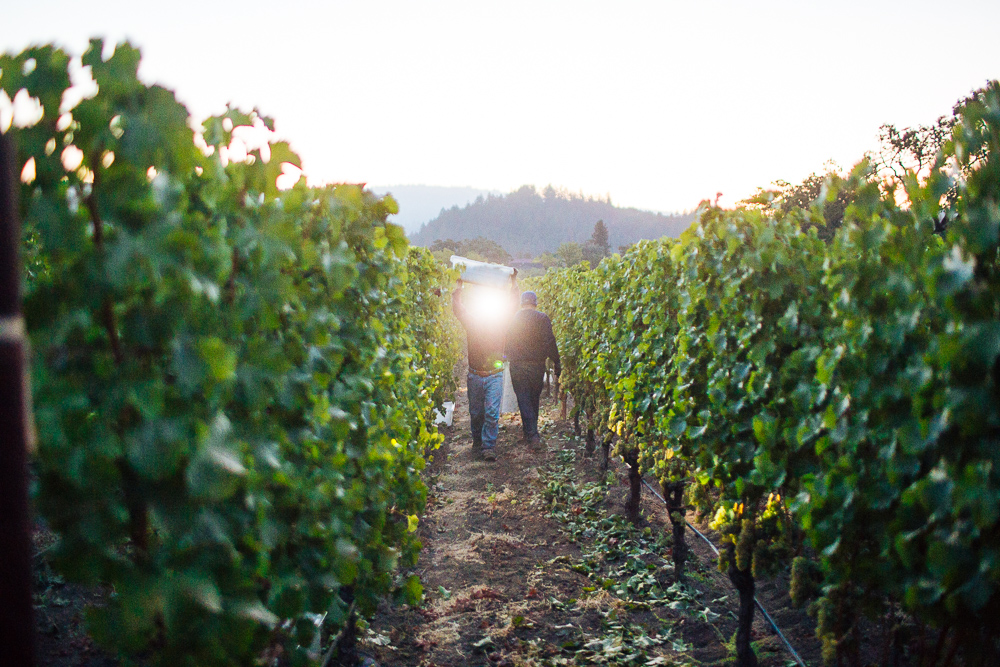 wine-harvest-photographer-in-napa-valley_0084