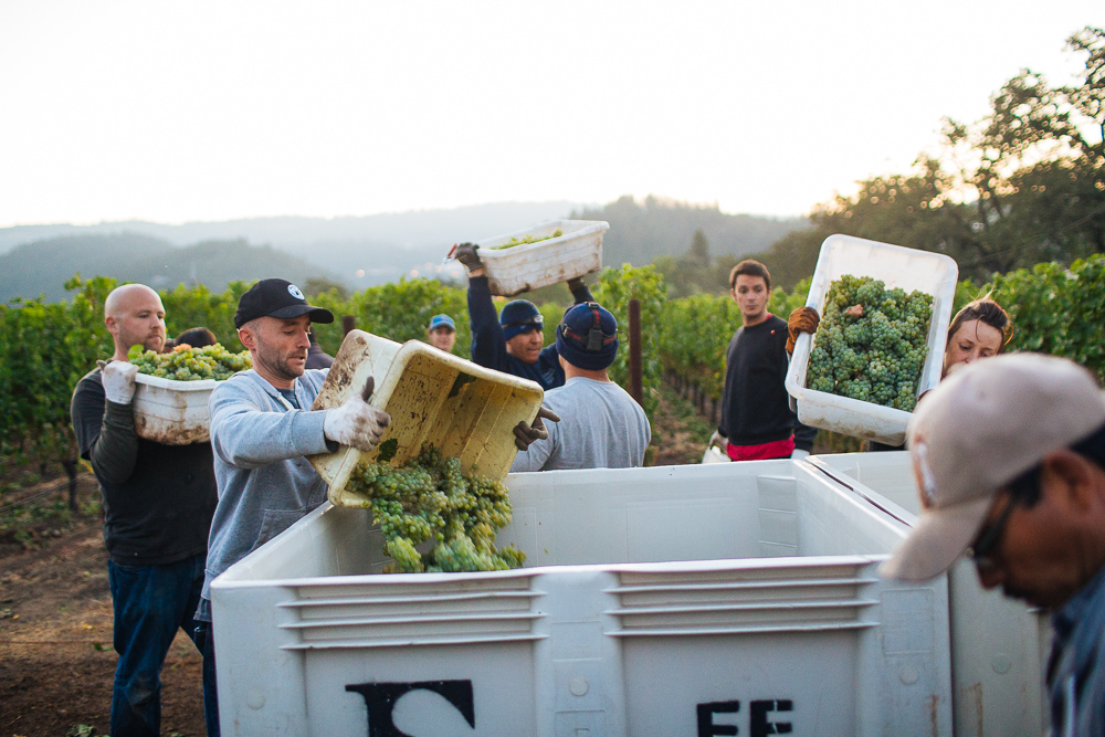 wine-harvest-photographer-in-napa-valley_0111