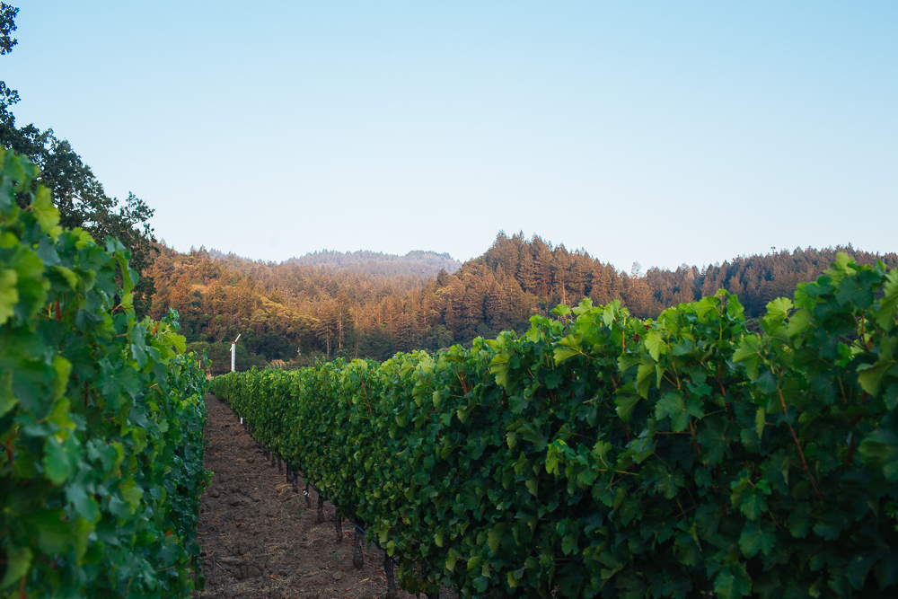 wine-harvest-photographer-in-napa-valley_0212