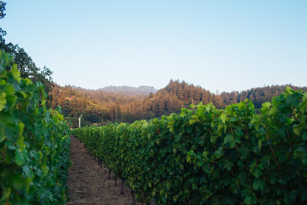 wine-harvest-photographer-in-napa-valley_0212