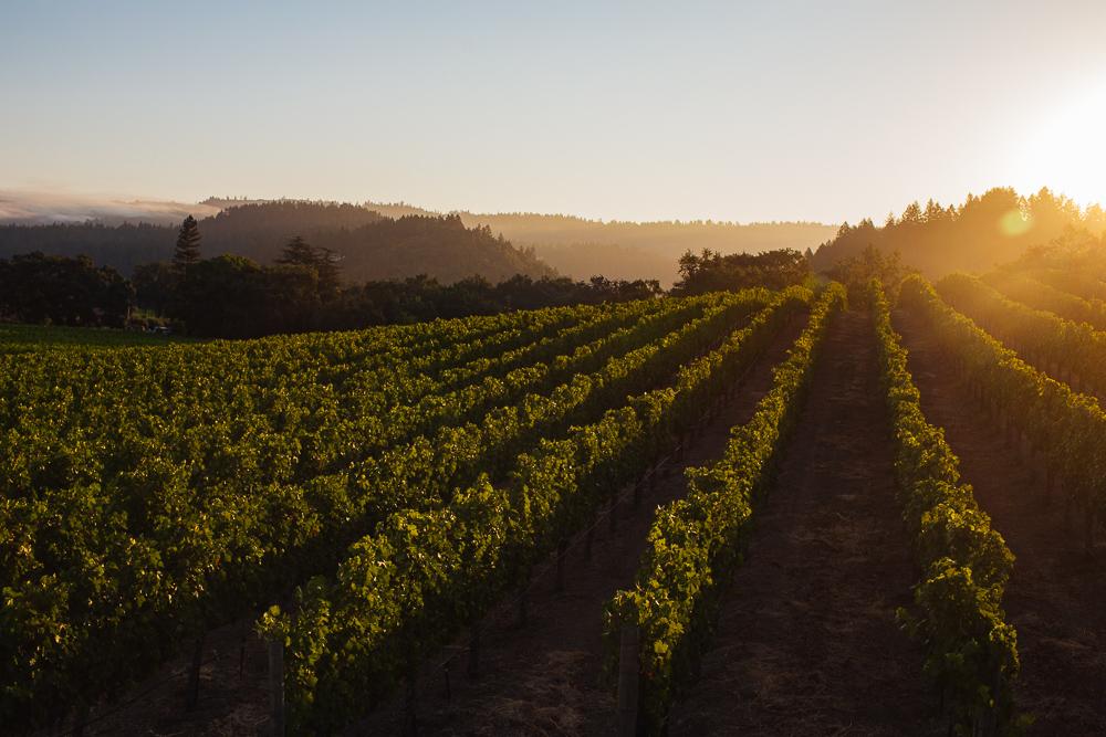 wine-harvest-photographer-in-napa-valley_0244