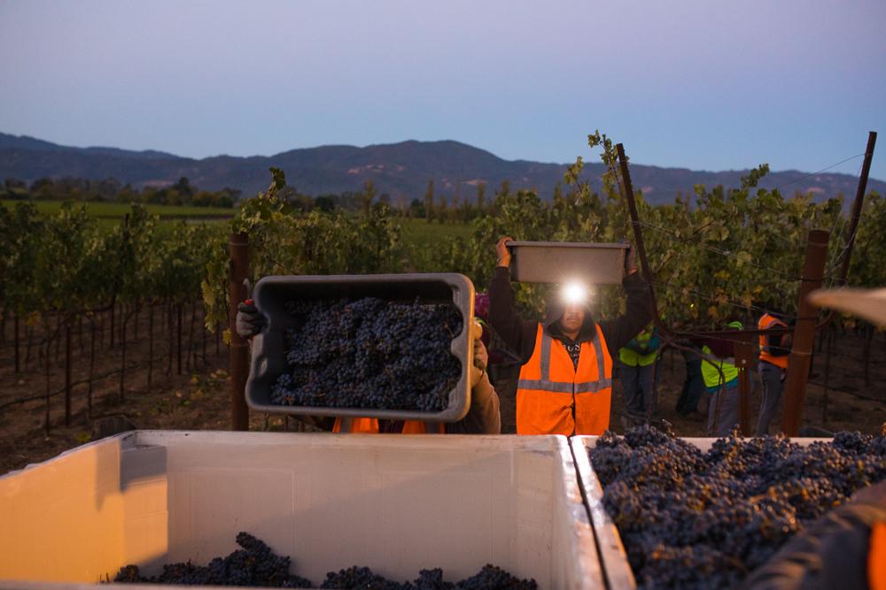 napa-harvest-vineyard-and-wine-photographer0002