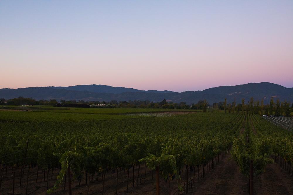 napa-harvest-vineyard-and-wine-photographer0003