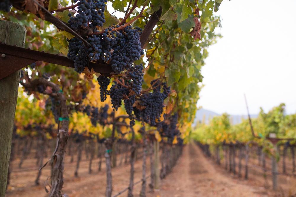 napa-harvest-vineyard-and-wine-photographer0004