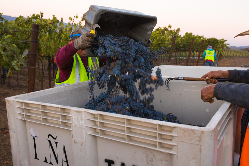 napa-harvest-vineyard-and-wine-photographer0006
