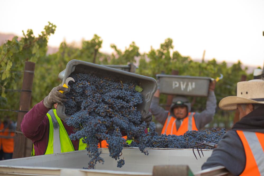 napa-harvest-vineyard-and-wine-photographer0009