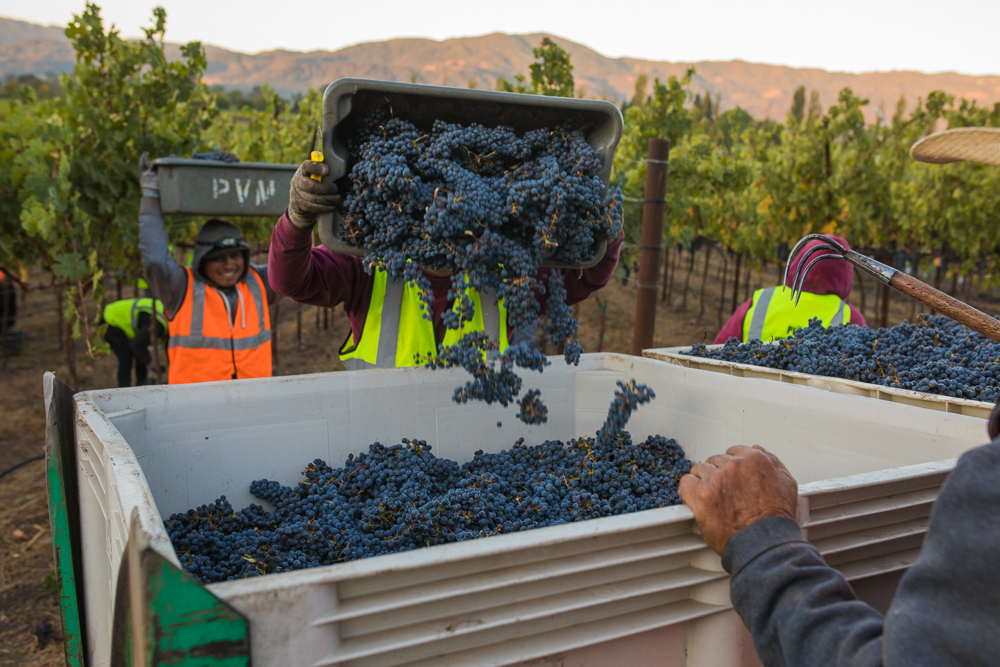 napa-harvest-vineyard-and-wine-photographer0014