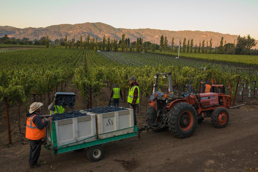 napa-harvest-vineyard-and-wine-photographer0015