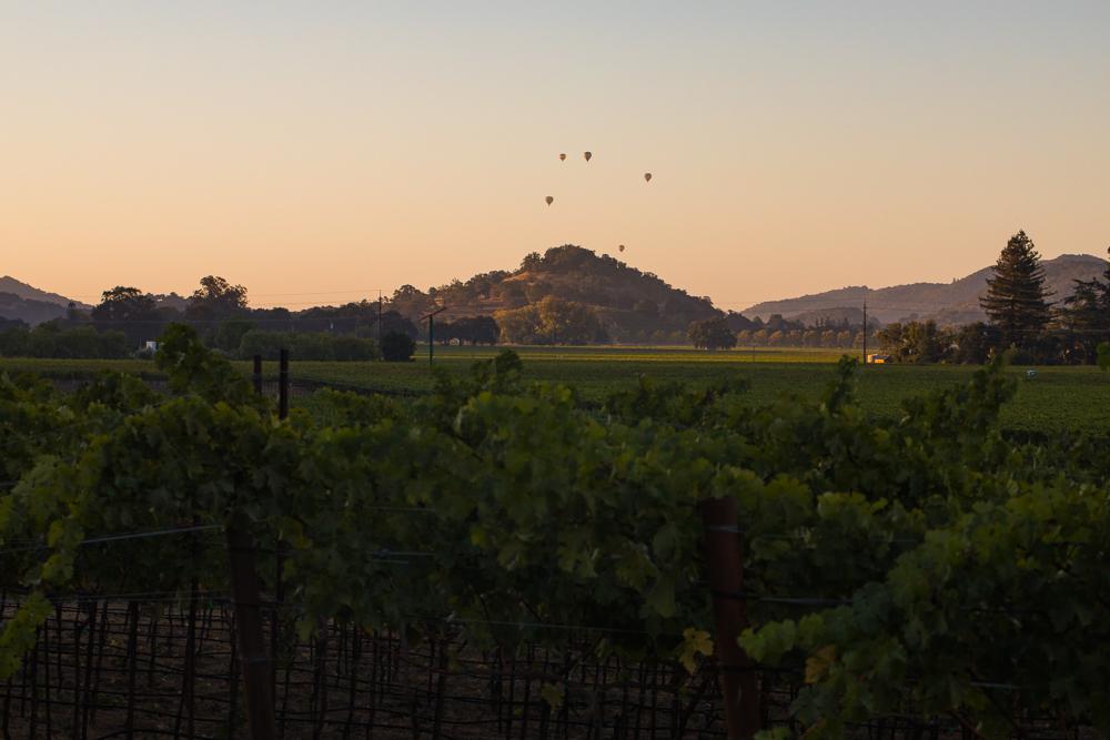 napa-harvest-vineyard-and-wine-photographer0018