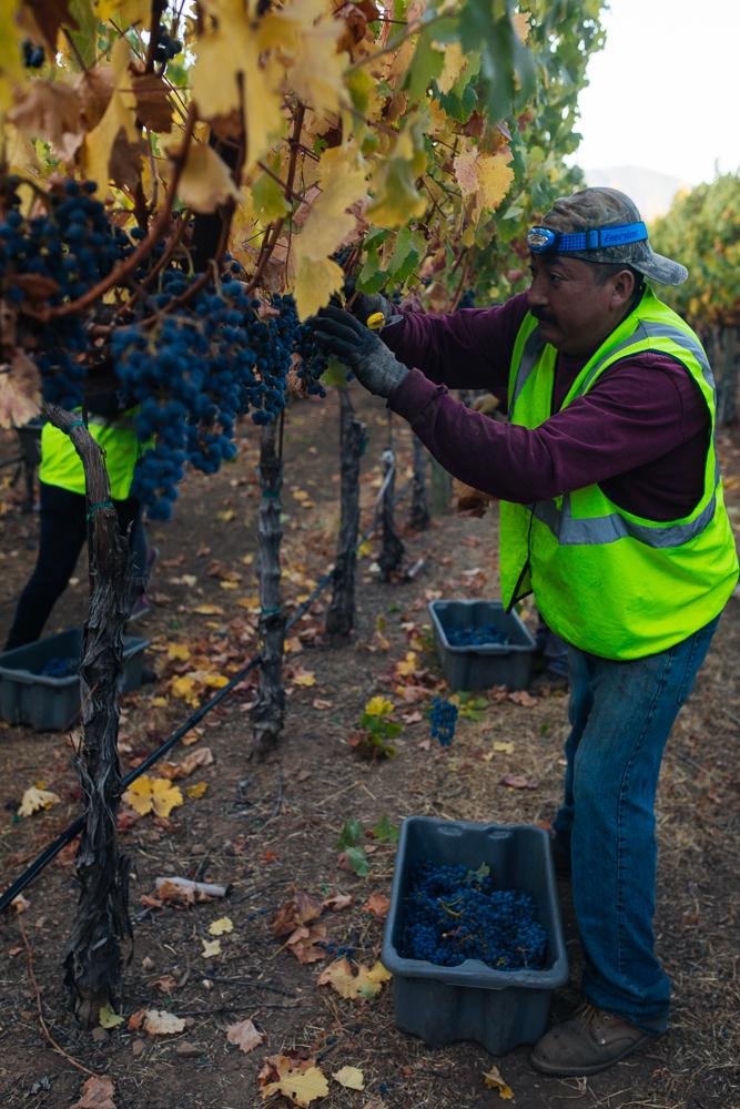 napa-harvest-vineyard-and-wine-photographer0019