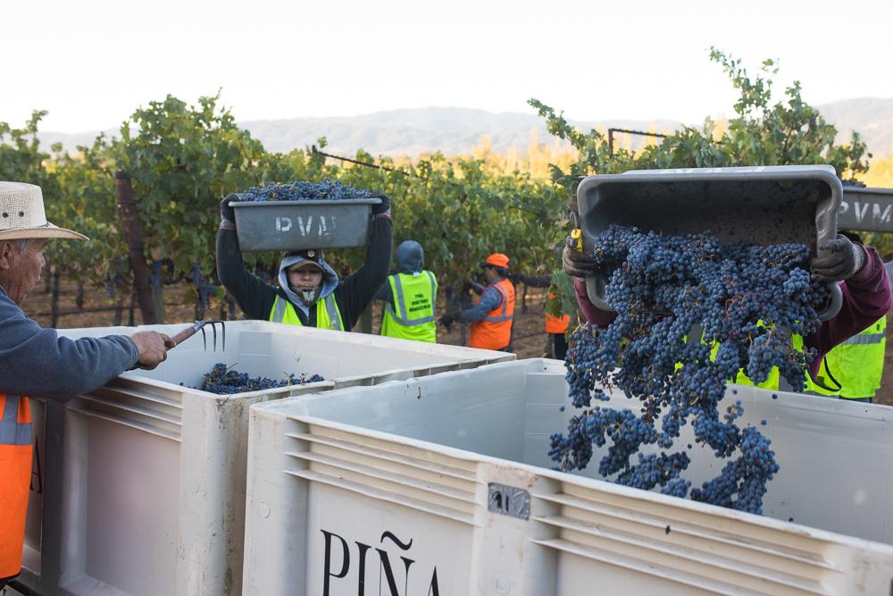 napa-harvest-vineyard-and-wine-photographer0022
