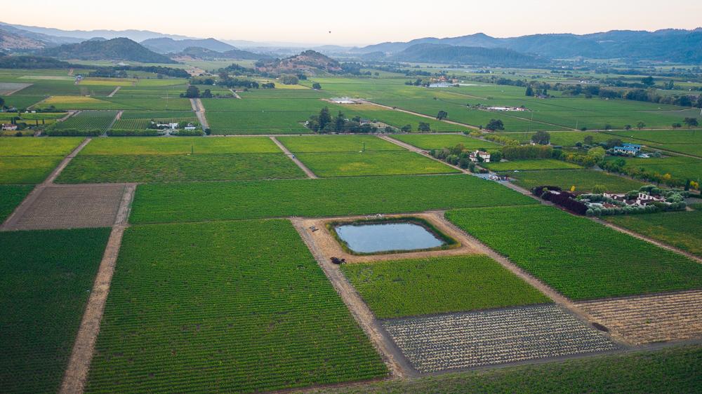 napa-harvest-vineyard-and-wine-photographer0024