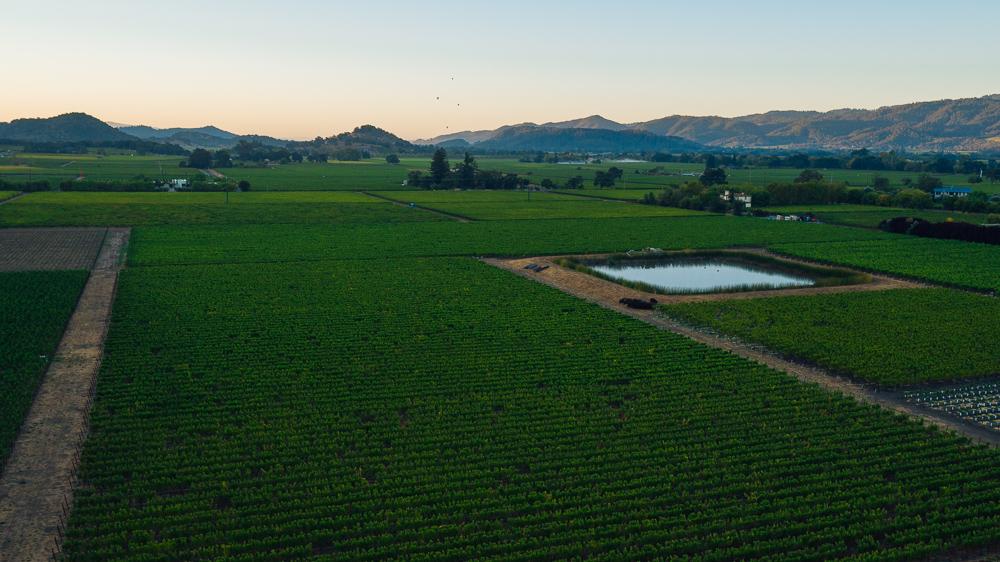 napa-harvest-vineyard-and-wine-photographer0027