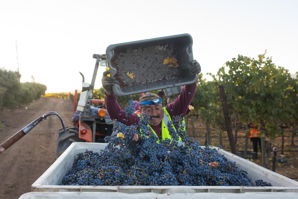 napa-harvest-vineyard-and-wine-photographer0032