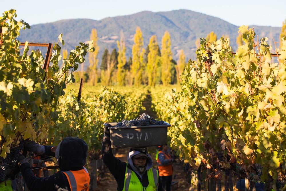 napa-harvest-vineyard-and-wine-photographer0034