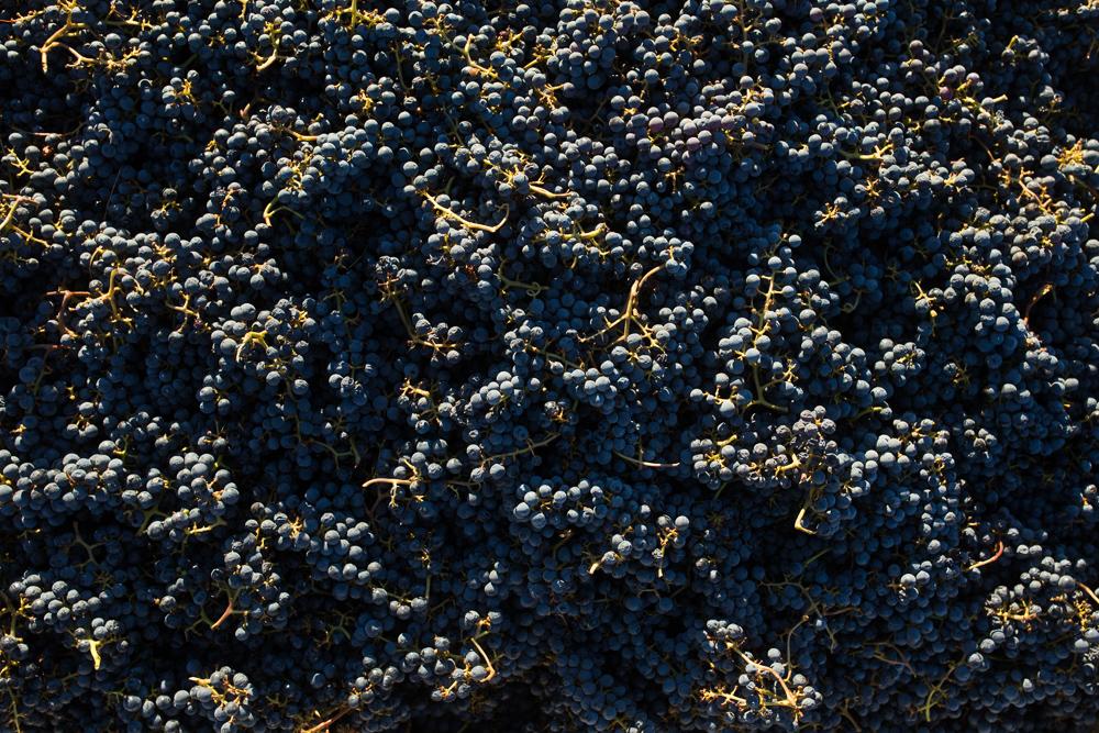 napa-harvest-vineyard-and-wine-photographer0035